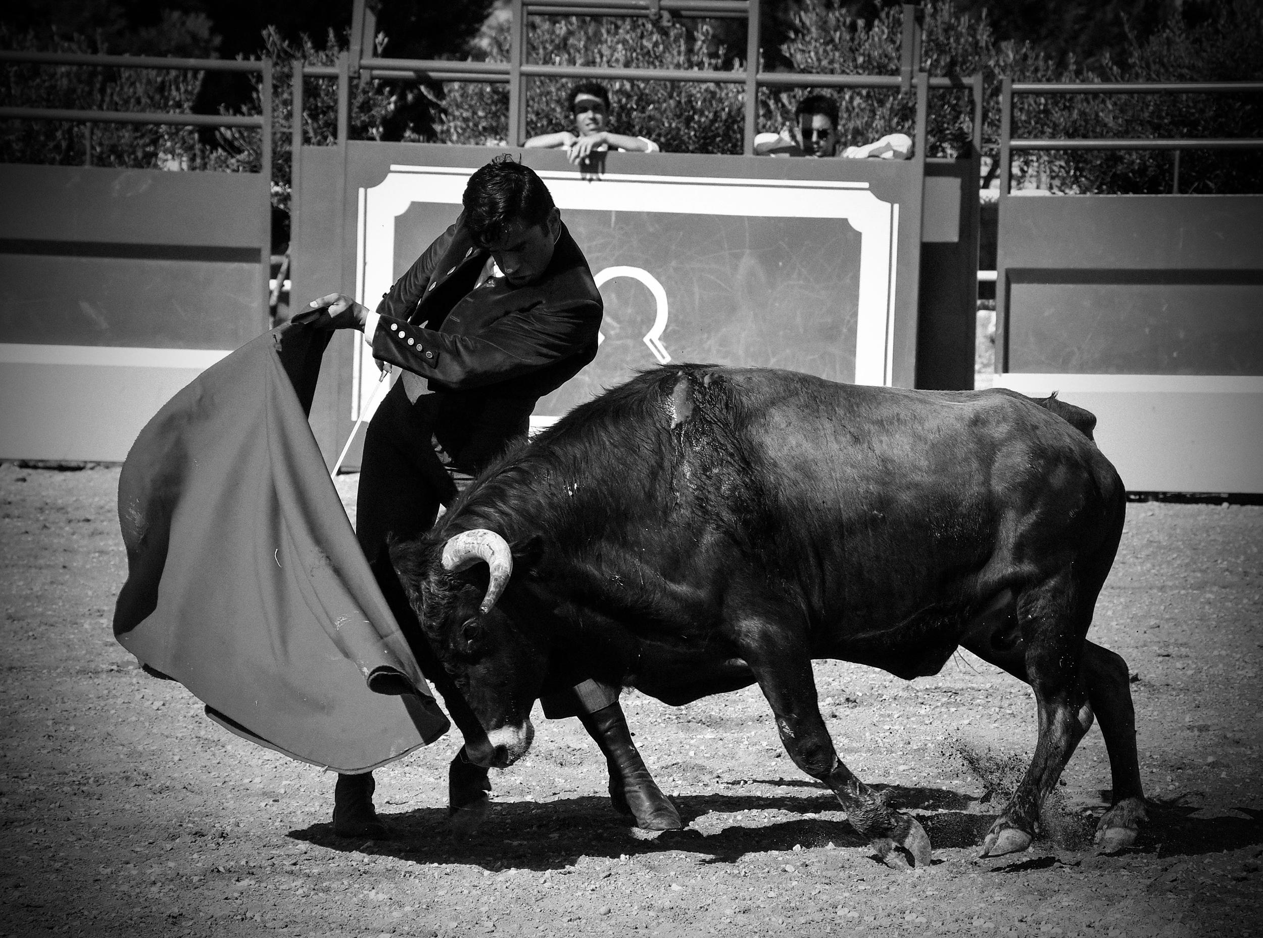 Tentadero Jose daniel guerrero Imanol Sánchez Pase de pecho