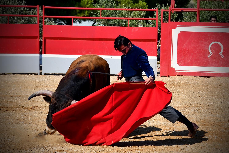 Imanol Sánchez tentando un novillo de José Daniel Guerrero RED